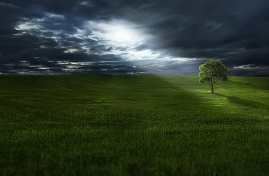 tree-736888_640